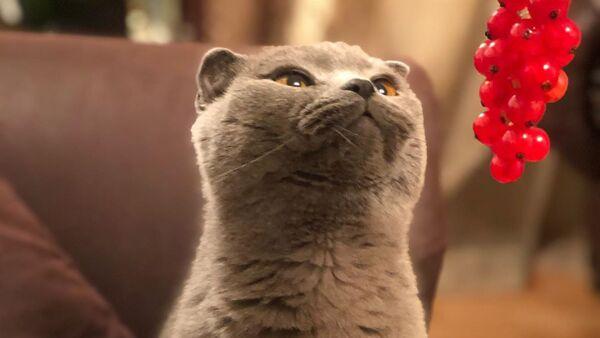 Кошка по кличке Ким - Sputnik Արմենիա