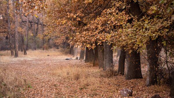 Осень в ботаническом саду - Sputnik Армения