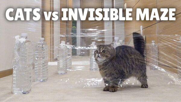 Кошки и невидимый лабиринт - Sputnik Արմենիա