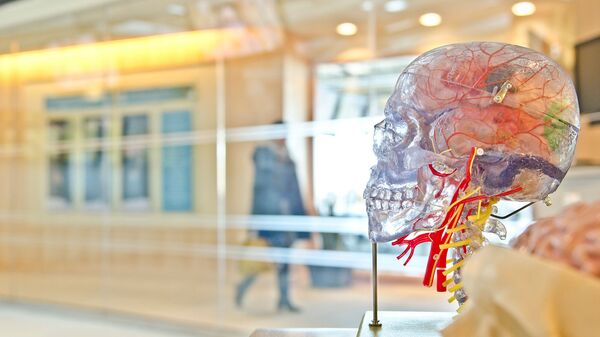Прозрачная модель черепа - Sputnik Արմենիա
