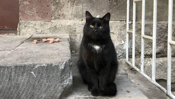 Черная кошка - Sputnik Արմենիա