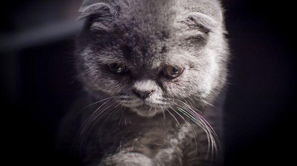 Кот, архивное фото - Sputnik Армения