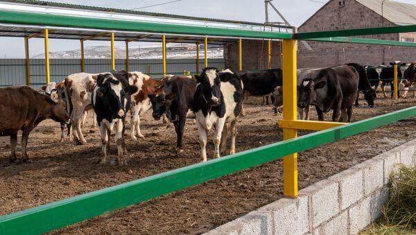 Современная ферма в селе Азатан, Ширак - Sputnik Արմենիա