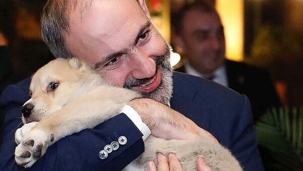 Премьер-министр Никол Пашинян с подарком от премьера Грузии Георгия Гахария (3 марта 2020). Тбилиси - Sputnik Армения