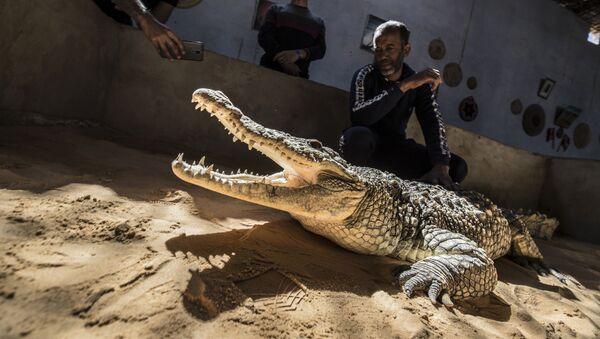 Житель деревни показывает посетителям крокодила в своем доме в нубийской деревне Гарб Сохейль, расположенной на Западном берегу реки Нил.  - Sputnik Армения