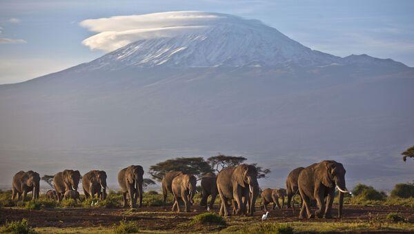 Стадо слонов на фоне горы Килиманджаро, Кения - Sputnik Армения