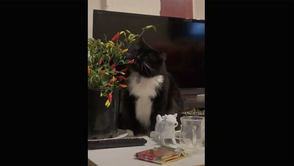 Смешные коты - Sputnik Армения