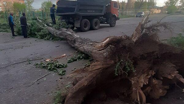 Сильный ветер перевернул деревья в Гюмри (22 мая 2020). Ширак - Sputnik Армения
