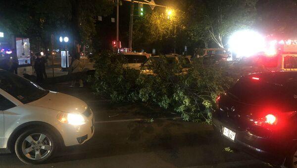 Упавшее дерево на пересечении проспекта Баграмяна и улицы Московяна (8 июня 2020). Еревaн - Sputnik Армения