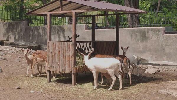 Երևանի կենդանաբանական այգում ծնվել է Ալիսան - Sputnik Արմենիա