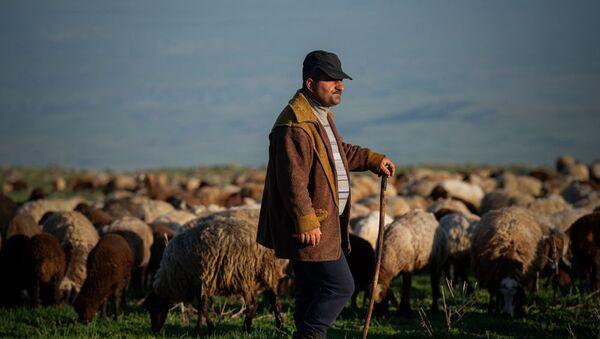 От Арагаца до Арарата: народ, который любит армянские горы не меньше армян - Sputnik Армения