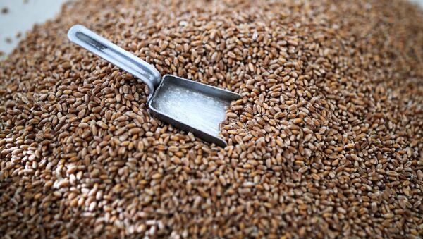 Зерно пшениц - Sputnik Արմենիա