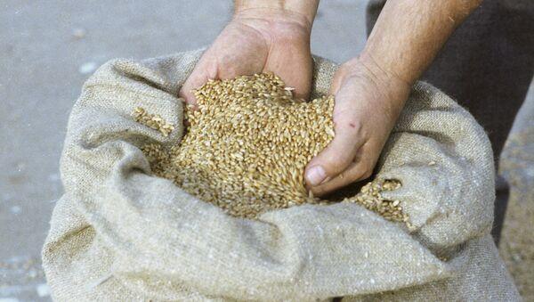 Яровая пшеница - Sputnik Армения