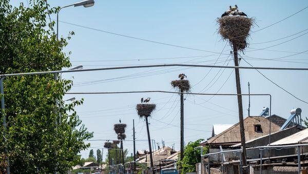 Аисты с испачканными перьями в селе Овташат - Sputnik Армения