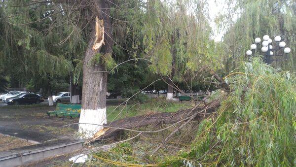 Сильный ветер в Ереване повалил деревья - Sputnik Արմենիա