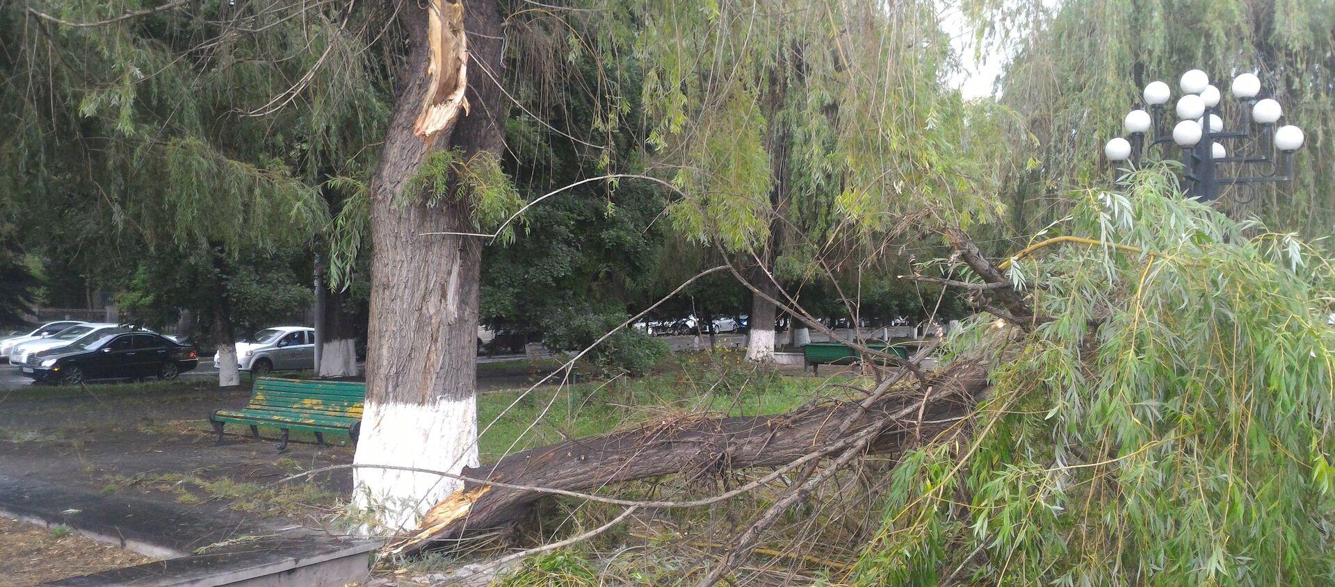 Сильный ветер в Ереване повалил деревья - Sputnik Արմենիա, 1920, 03.04.2018