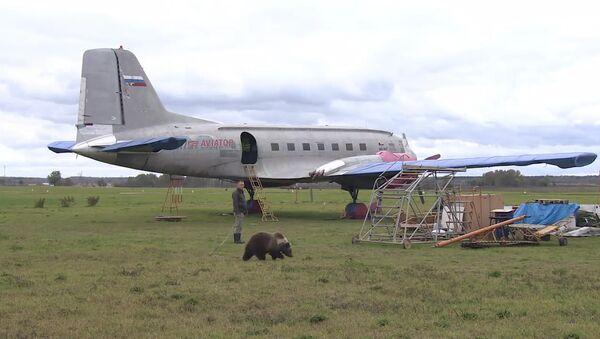 СПУТНИК_Медвежонок Мансур поселился на аэродроме под Тверью и подружился с лайкой - Sputnik Армения