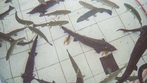 Рыба в магазине - Sputnik Армения