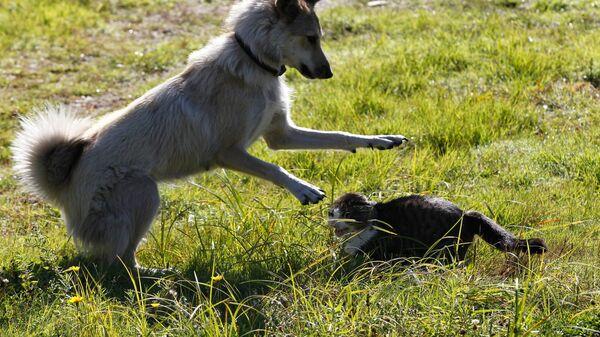 Кошка с собакой на улице  - Sputnik Արմենիա