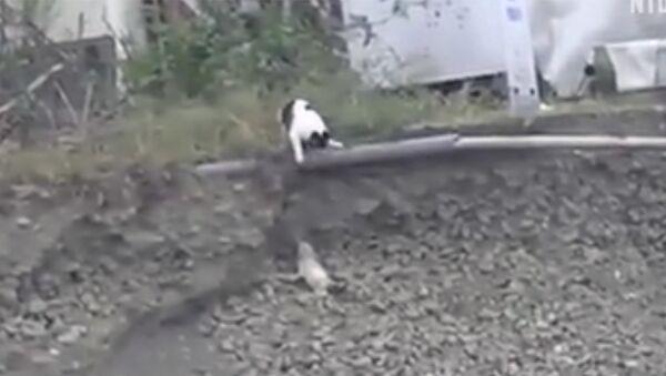 Кошка спасла щенка от неминуемой смерти - Sputnik Армения