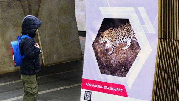 Выставка Король армянских гор – кавказский леопард  в армянском метро - Sputnik Армения