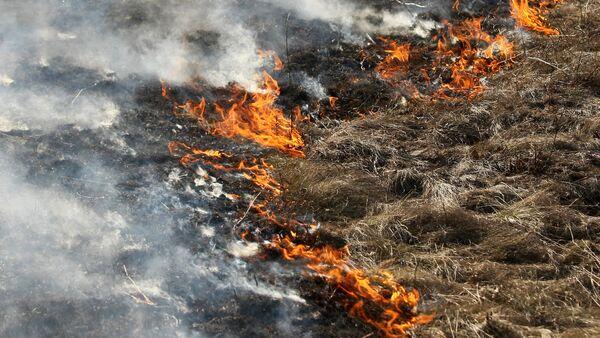 Огонь, пожар. Сухая трава - Sputnik Армения
