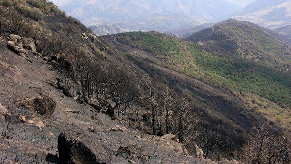 Хосровский лес после пожара - Sputnik Армения