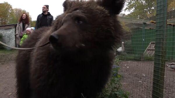 СПУТНИК_Как медведицу Дашу спасли из бродячего цирка - Sputnik Армения