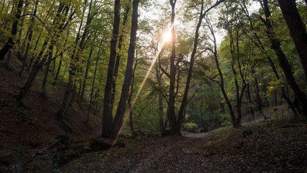 Дилижанский национальный парк, Армения - Sputnik Армения