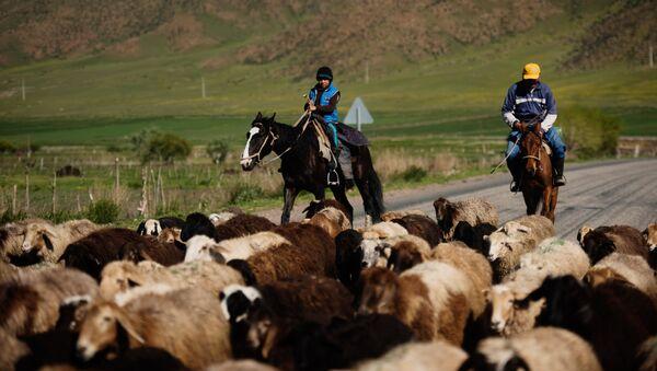 Пастухи - Sputnik Արմենիա
